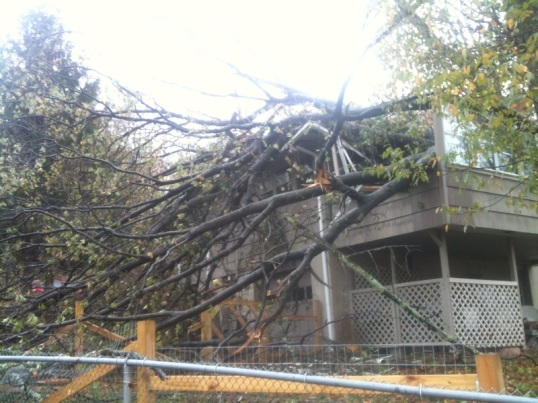 Tree on house-South